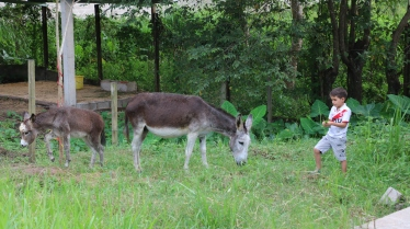 The donkeys from the Animal Therapy Programme at El Hogar orphanage